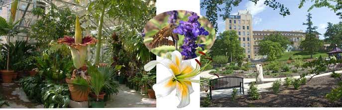 Botany garden pictures