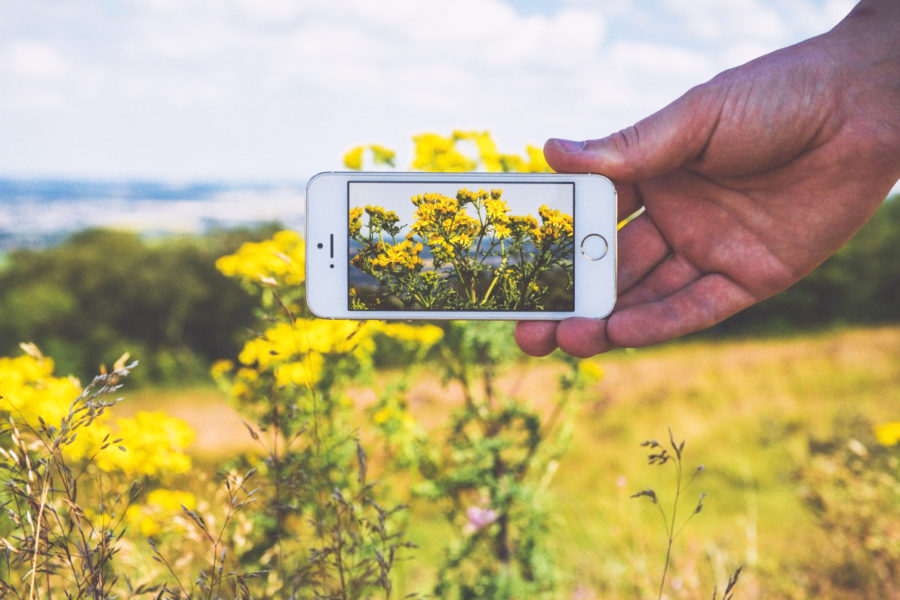 smartphone with flowers