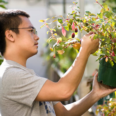 student worker in the Botany Greenhouse