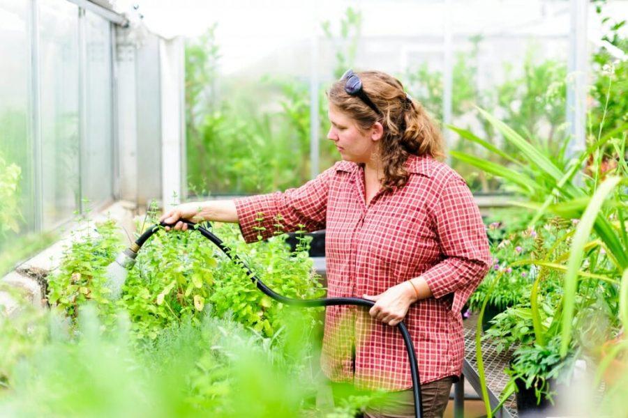 watering greenhouse plants